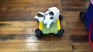 Gambar cover Kitten on wheels