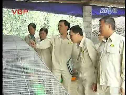 Bồ Câu pháp Quảng La - Mô hình mới trong xây dựng NTM