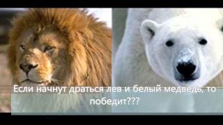 Кто сильнее лев или медведь?(Кто сильнее лев или медведь?, 2015-03-07T17:38:44.000Z)