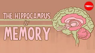 What Happens When You Remove The Hippocampus? - Sam Kean