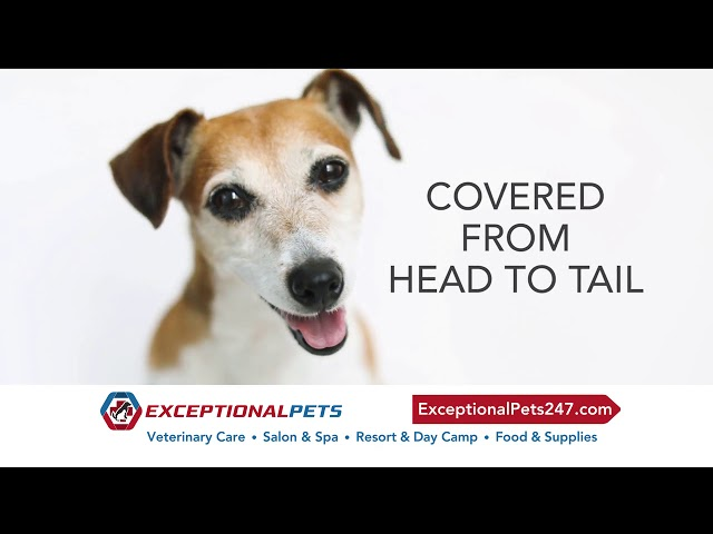 Exceptional Pets Grand Opening Chandler!