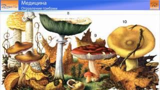 Отравление грибами(Вы любите собирать грибы?Однако не стоит забывать об осторожности. Отравление грибами-весьма распростране..., 2011-02-02T23:58:56.000Z)