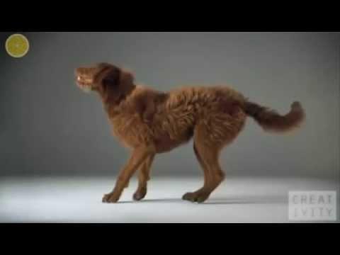 Extreme dog tricks & IMPOSSIBLE CHALLENGE !!!