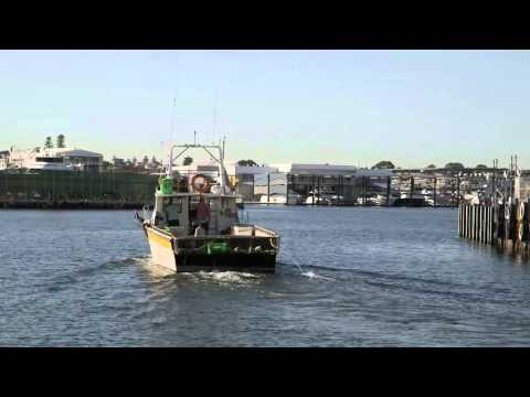 Bailey's Marine Fuels -  Introduction