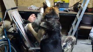 Собака понимает, что это игра, ему нравится играть - не кидается