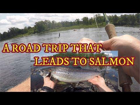 SALMON FISHING IN NEWFOUNDLAND   GANDER RIVER BOAT   WOLVES   GANDER & CAMPBELLTON RIVER   ROAD TRIP
