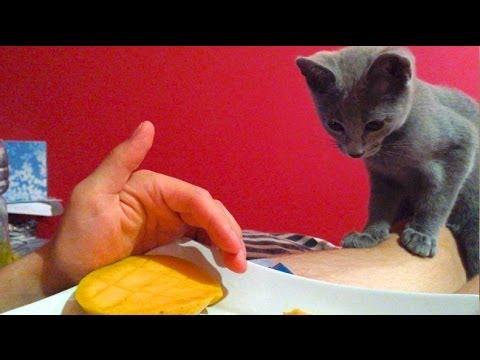 Russian Blue Cat/Kitten LOVES FRUIT ?!?! Check it out! SO CUTE