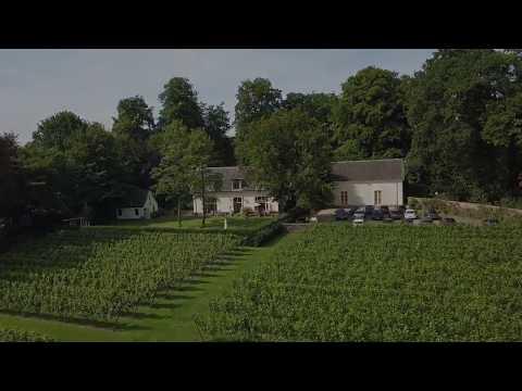 Zeister wijngaard Hoog Beek & Royen