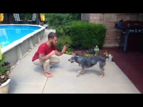 Teaching Your Dog A New Trick w/Maggie The Blue Heeler