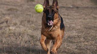 11 הכלבים הכי נאמנים