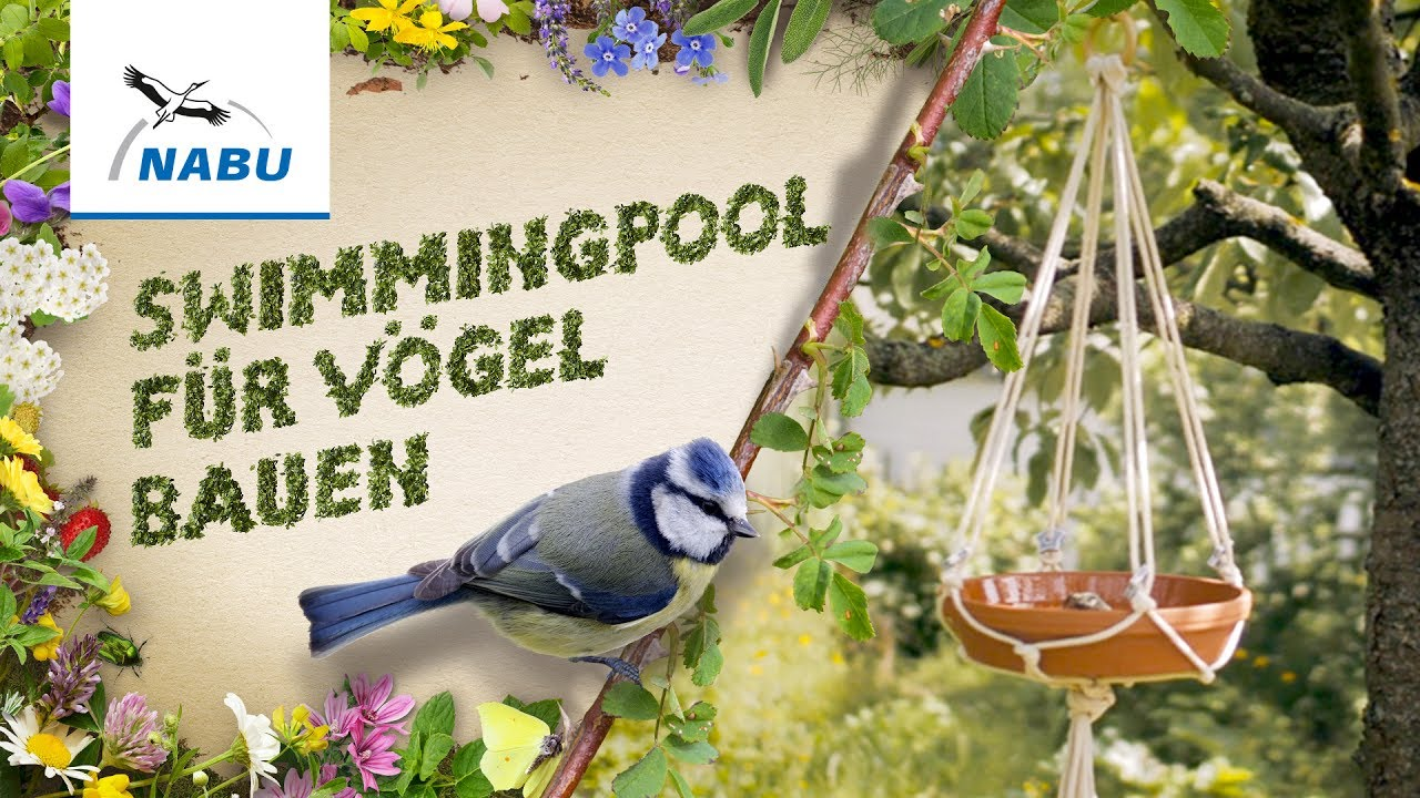 swimmingpool für vögel bauen - youtube