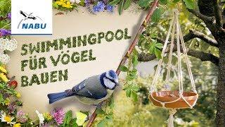 Swimmingpool Für Vögel Bauen