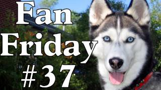 Are Siberian Huskies A Difficult Breed? - Fan Friday #37