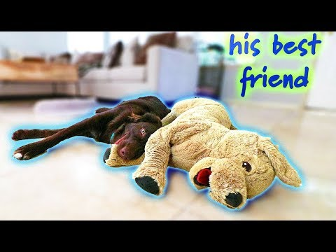 Rescue Dog's Dream Comes True! Prepping for his Surgery #BarketList