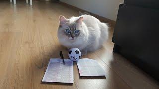 猫によるW杯勝敗予想、日本vsコロンビア戦はコロンビア勝利と予想