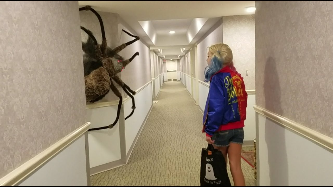 World's largest Spider Ever - YouTube