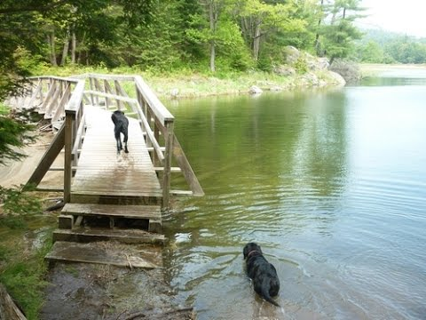 Dogs Swimming in Killarney