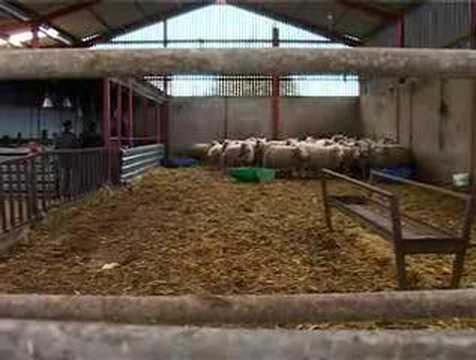 Farms in Armoy