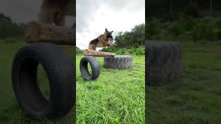 it is training time beautiful dog #shorts subscribe for more❤
