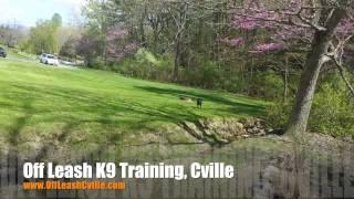 "6 Month Old Pit Bull ""dutchess"" Before/after Video | Harrisonburg Dog Trainer"