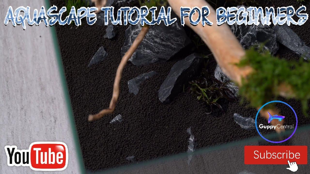 AQUASCAPE TUTORIAL FOR BEGINNERS! #aquascape #beginner # ...