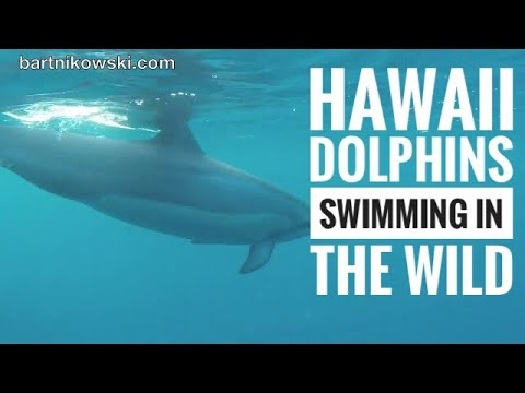 Hawaii, Big Island, Best Thing to Do, Swim with Dolphins