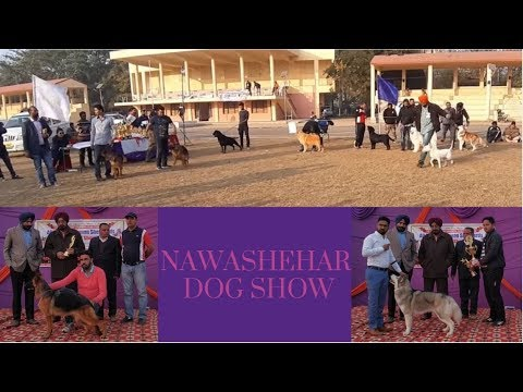 Nawashehar Dog Show - Overview
