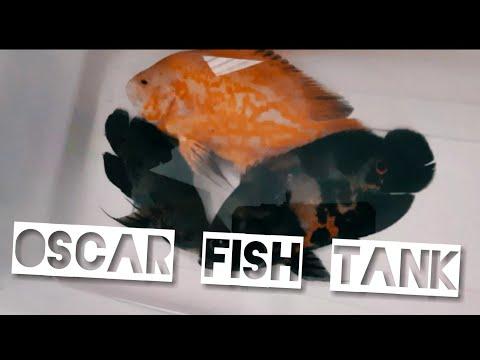 Cleaning my Oscar fish tank aquarium
