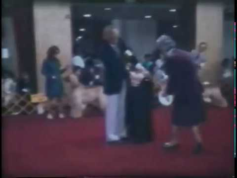 1977 AHCA National Specialty - Best of Breed