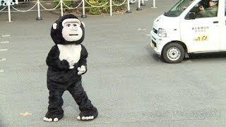 Tokyo zoo stages 'gorilla escape'