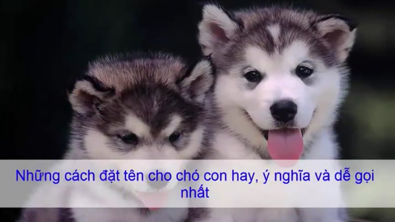 Cách đặt tên cho chó hay, ý nghĩa nhất cho cún yêu