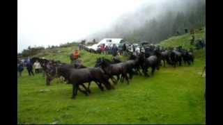 Transhumance en Bethmale Ariège Pyrénées vidéo 2010.