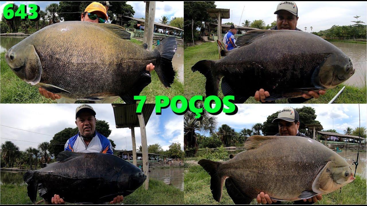 Pescaria de domingo no Pesque Pague 7 Poços - Programa Fishingtur na TV 643