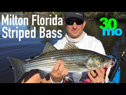 FISHING FOR STRIPER In MILTON FLORIDA Winter Time Bass Fishing