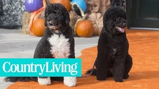 A Look Back at The First Dogs Bo And Sunny's Best White House Moments | Country Living