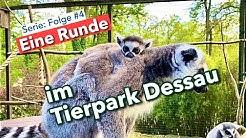 Eine Runde: im Tierpark Dessau