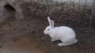 кролики в яме 2015