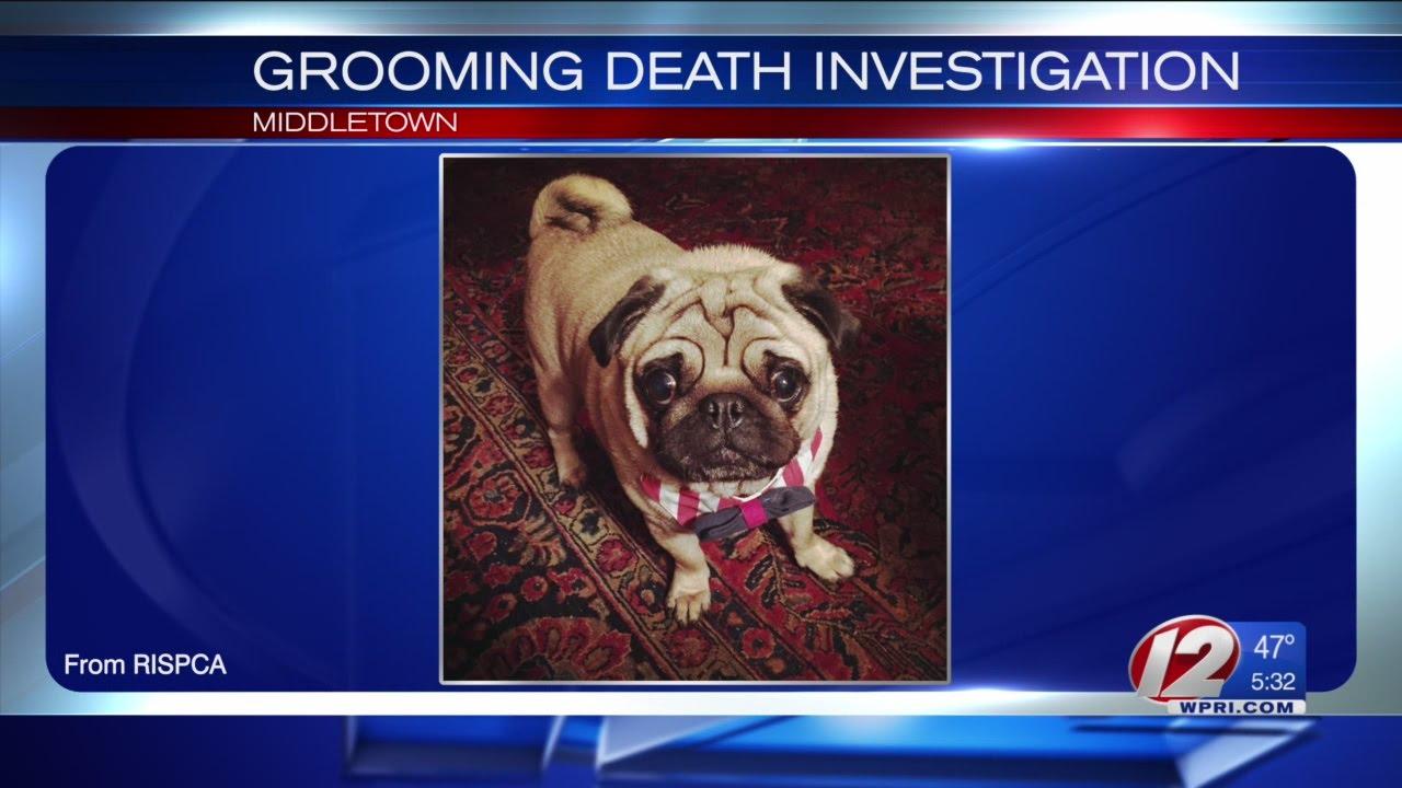 Grooming Petco Dog Dies