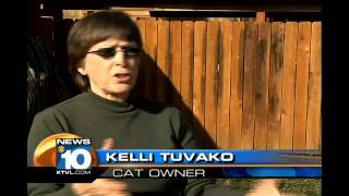 Dog Kills Cat In Its Home