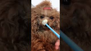 Look at these cute and funny puppies dogs 3198