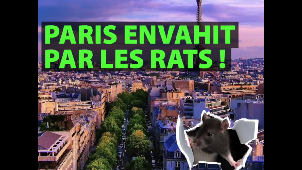rats dans paris youtube. Black Bedroom Furniture Sets. Home Design Ideas