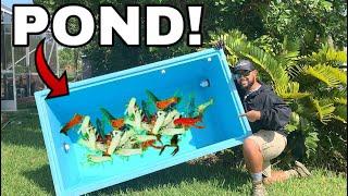 Colorful Crawfish Lobster ARMY in my BATHTUB AQUARIUM POND!