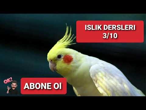 Mustafa Yıldızdoğan - Ölürüm Türkiyem - Sultan Papağanı 1Saat Islık Dersleri (REKLAMSIZ)