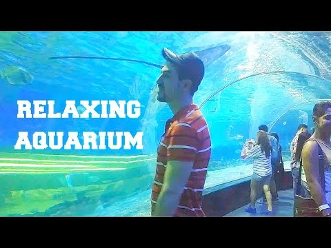 MANILA OCEAN PARK PART II AMAZING AQUARIUM