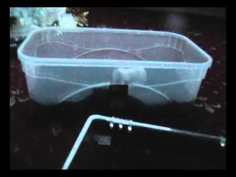 Grammostola Pulchra - Brazilian Black (2) Unpacking - Kevin Lackie (A+++)