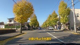 千葉市 小倉いちょう大通り 車載動画 [2013-11]