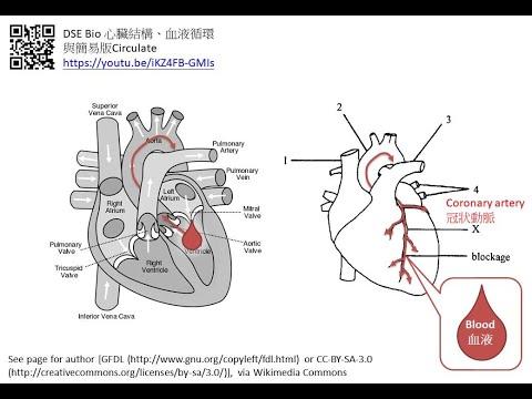 DSE Bio 心血管疾病精讀班:冠心病與中風 Cardiovascular Diseases: Coronary Heart Disease And Stroke