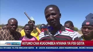 Nyama ya Fisi 'yagombewa kama Njugu'...kisa?