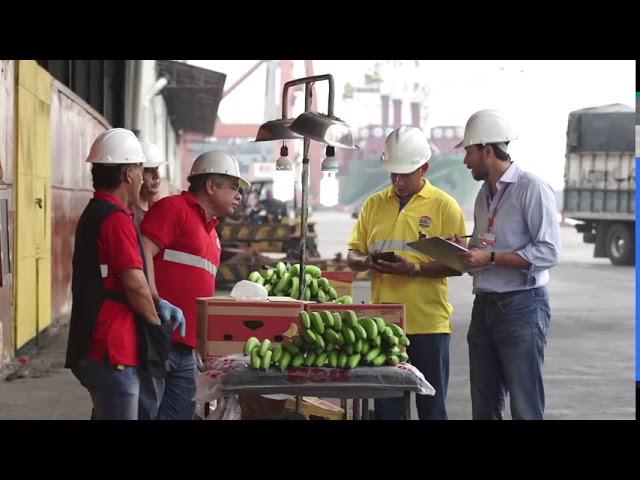 Banana Experts
