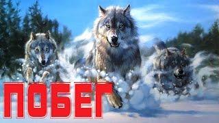Владимир Лисицын - Побег (Студия Шура) клипы шансон